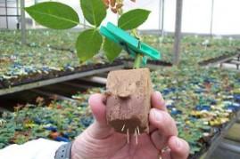 Espuma Fenólica para Plantio placa com 216 células de 2,5x2,5x3,8 cm
