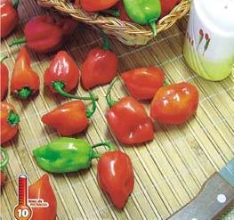 Pimenta Habanero Red 2,5g (sementes)
