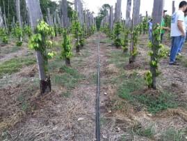 Mangueira Santeno Microperfurada Especial 100 metros para 2 m de espaçamento