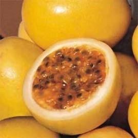 Maracujá Redondo Amarelo Premium  pacote com 50g