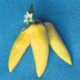 Pimenta Amarela Comprida 2,5g (sementes)