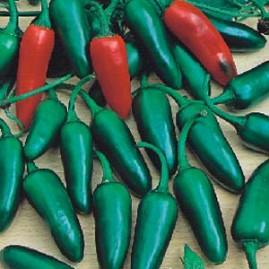 Pimenta jalapeño M