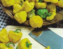 Pimenta Jamaican Yellow 2,5g sementes