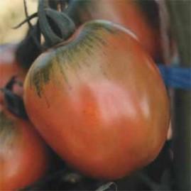 Tomate Santa Cruz Kada Gigante 50g
