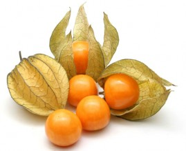 Fisális - A fruta dos Andes 1200 sementes