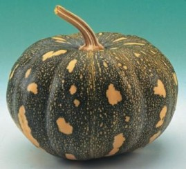 Abóbora Jacarezinho 100g de sementes aprox. 600 sementes