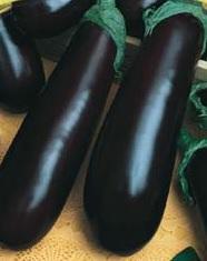 Berinjela Comprida Roxa 5g sementes