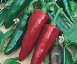 Pimenta Doce Italiana 2,5g (sementes)