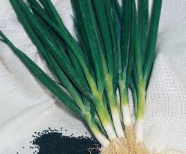 Cebolinha todo ano Nebuka 50g de sementes