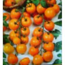 Tomate Cereja Lanja 2g (sementes)
