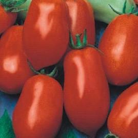 Tomate Italiano Para Molhos 2,5g (sementes)