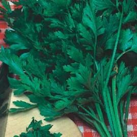 Salsa Lisa Comum 50g sementes