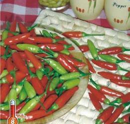 Pimenta Tabasco 2,5g (sementes)