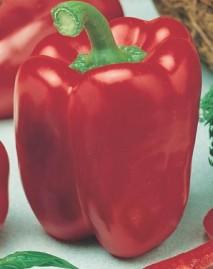 Pimentão Quadrado Vermelho 2,5g Sementes