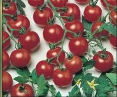 Tomate Cereja Vermelho 2g (sementes)